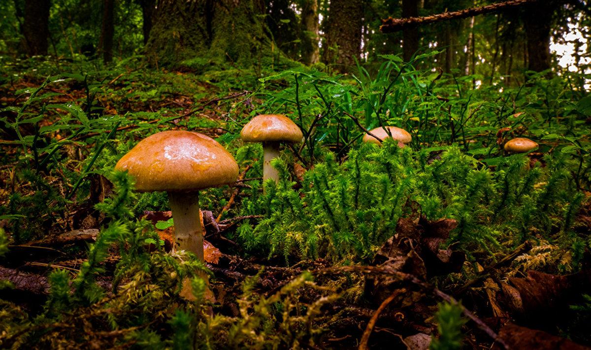 условно- и съедобные грибы, где найти и как фото 1