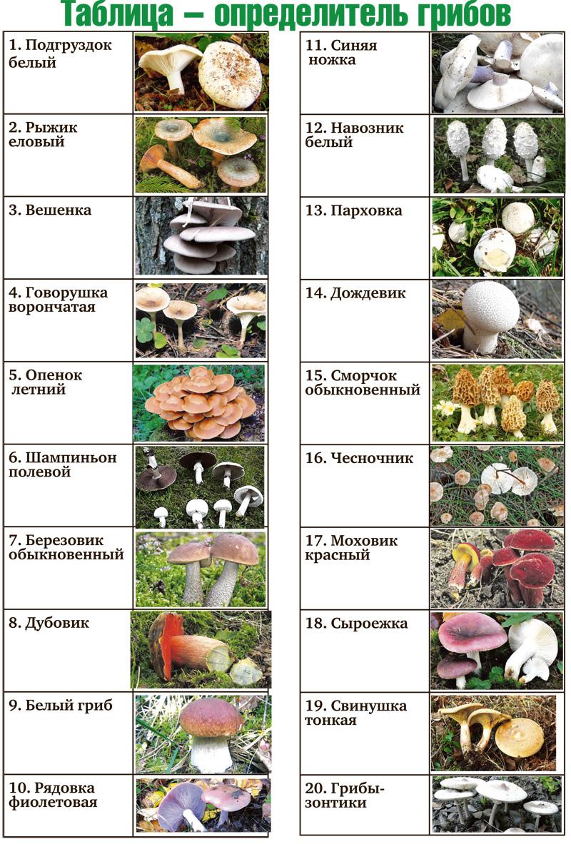 какие грибы можно собрать и найти в Воронежской области и Нововоронеже фото