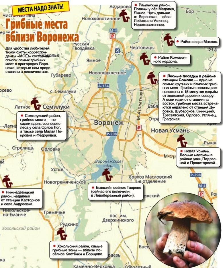 места сбора грибов в Воронеже, где собрать и куда поехать фото 2