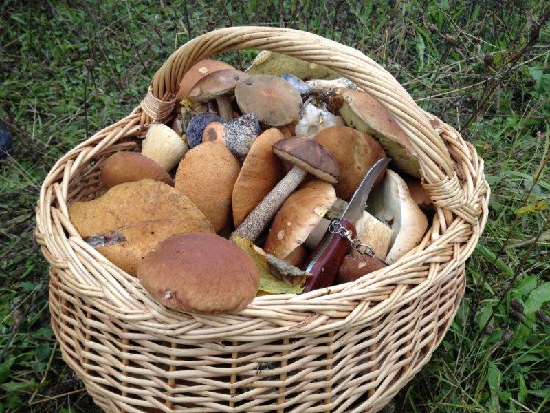 урожай грибов, фото отзывы 2021 фото 1