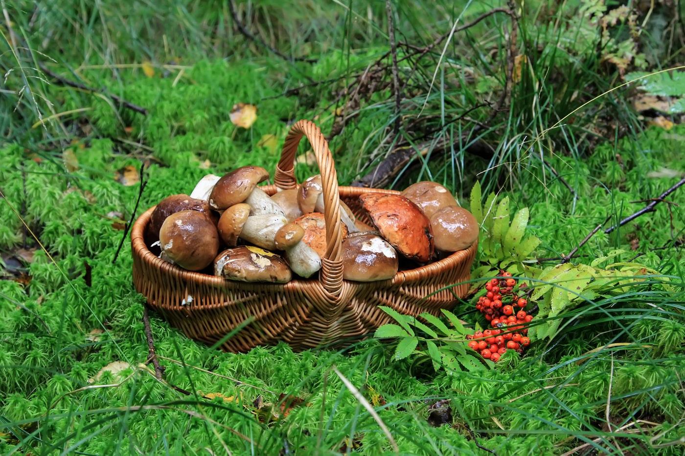 урожай грибов, фото отзывы 2021 фото 3