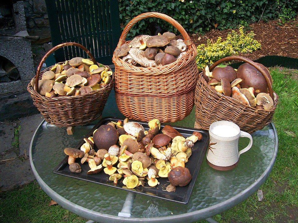 урожай грибов, фото отзывы 2021 фото 4