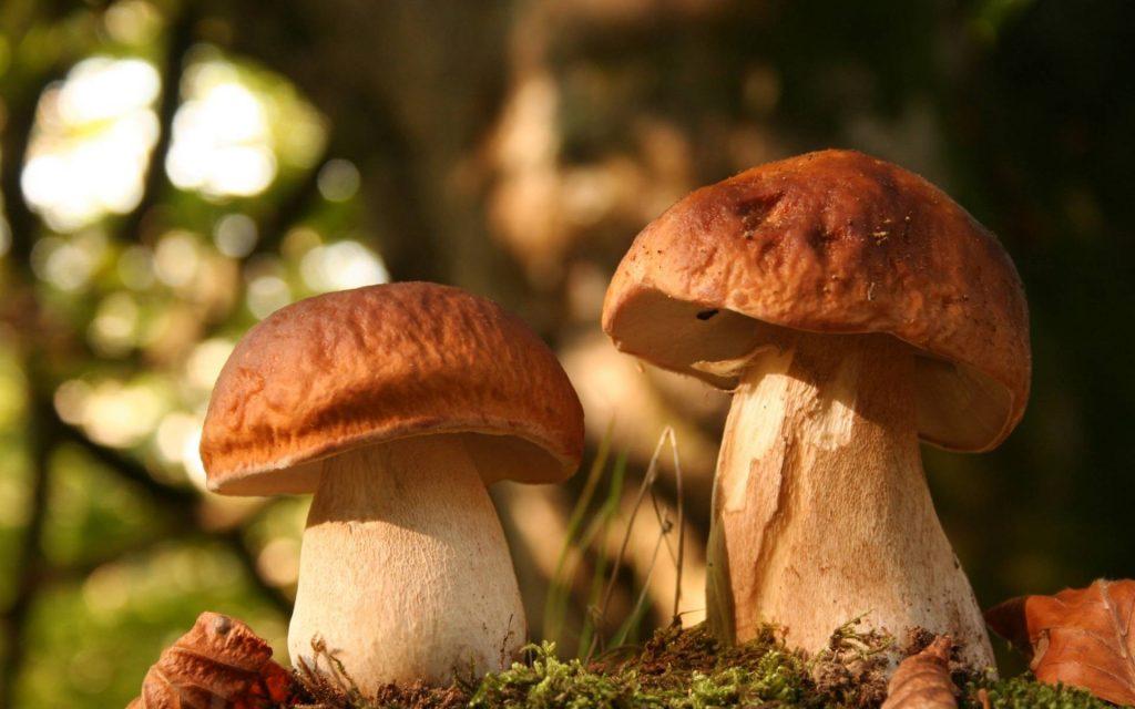 время года для плодоношения грибов фото