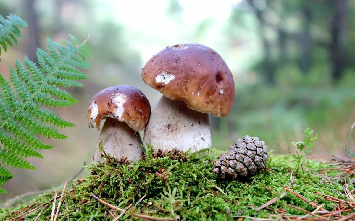 грибы и грибные места Волгоградской области 2021 фото