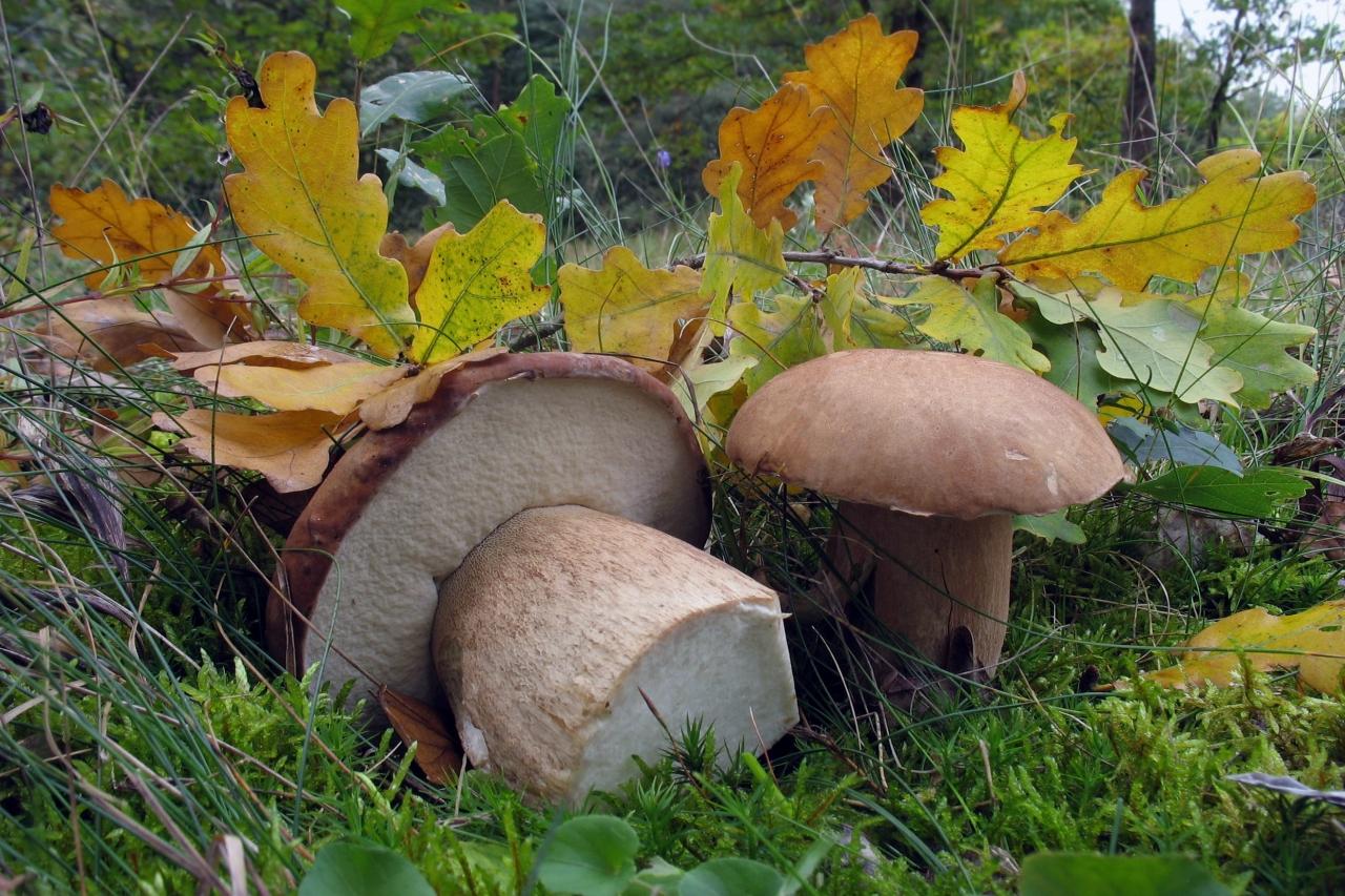 грибы в Севастополе, куда пойти на поиски и когда фото