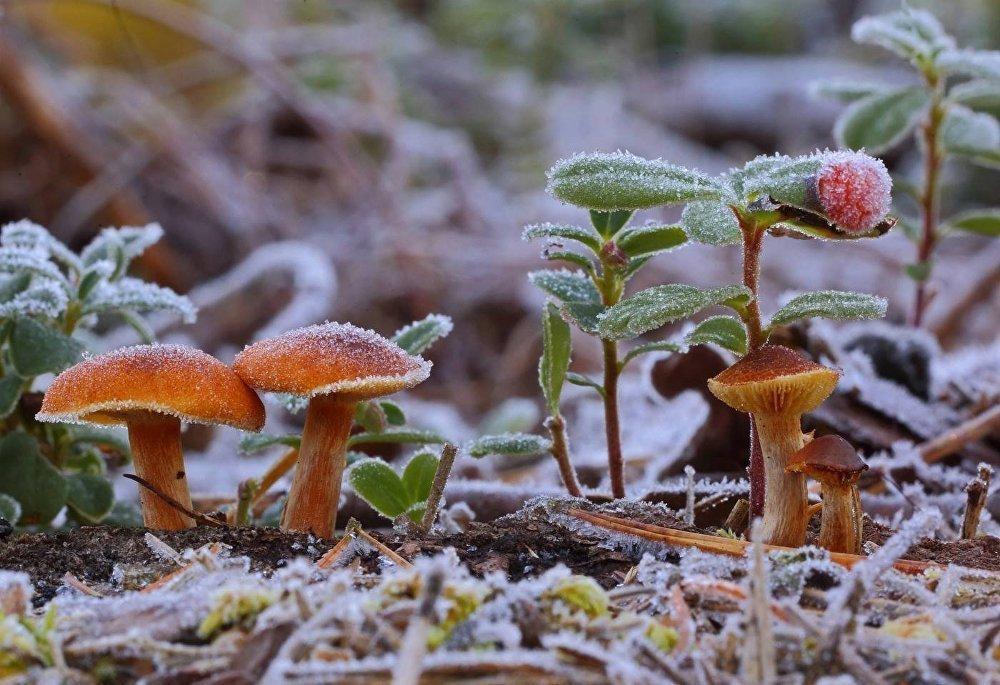 грибы и грибные места Новосибирска 2021 фото