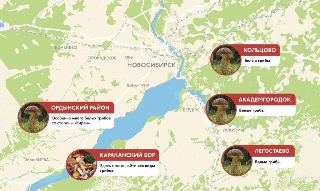 грибные места на карте Новосибирска 2021, фото 3