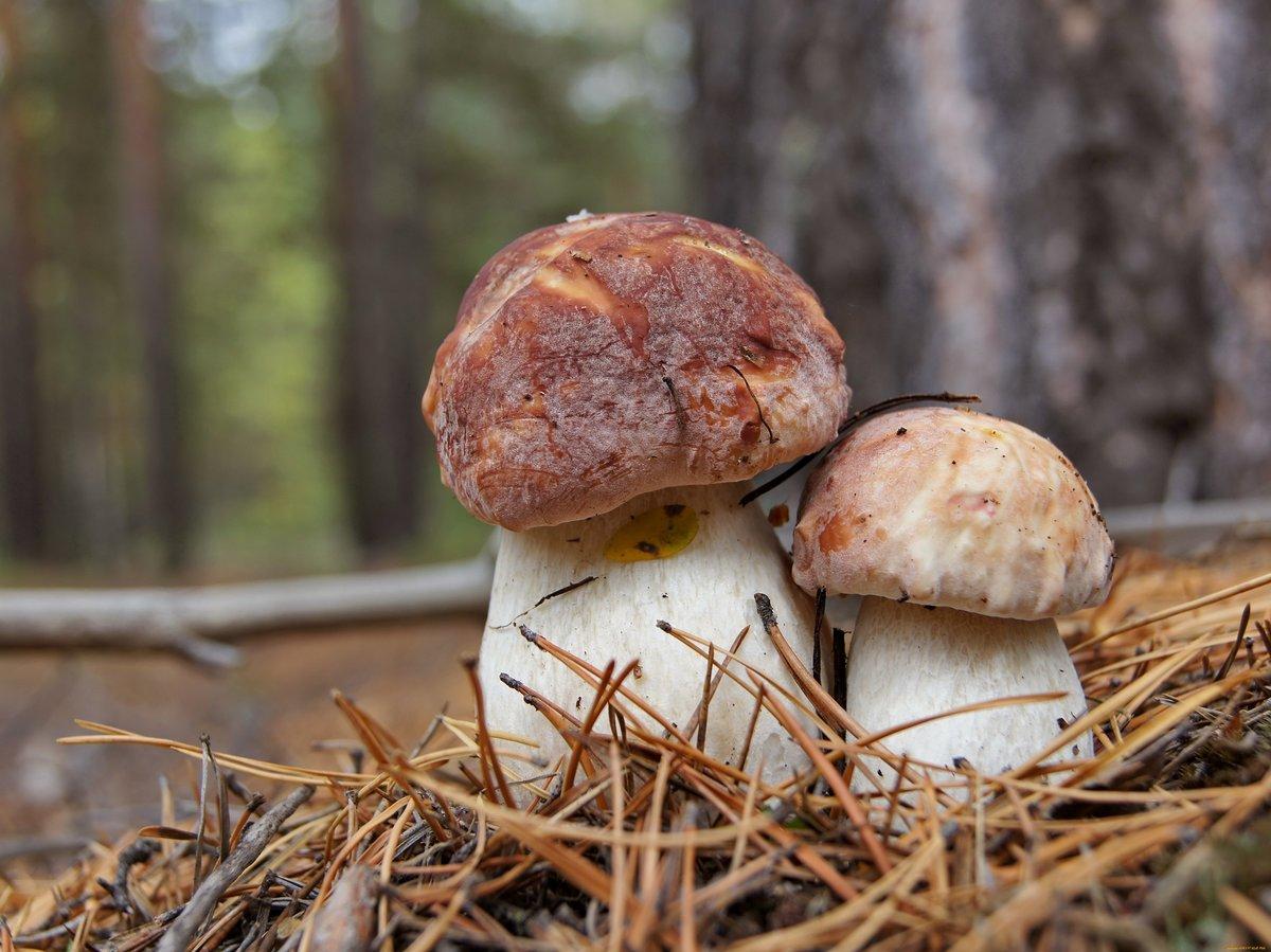 грибы в ростовской области лето 2021