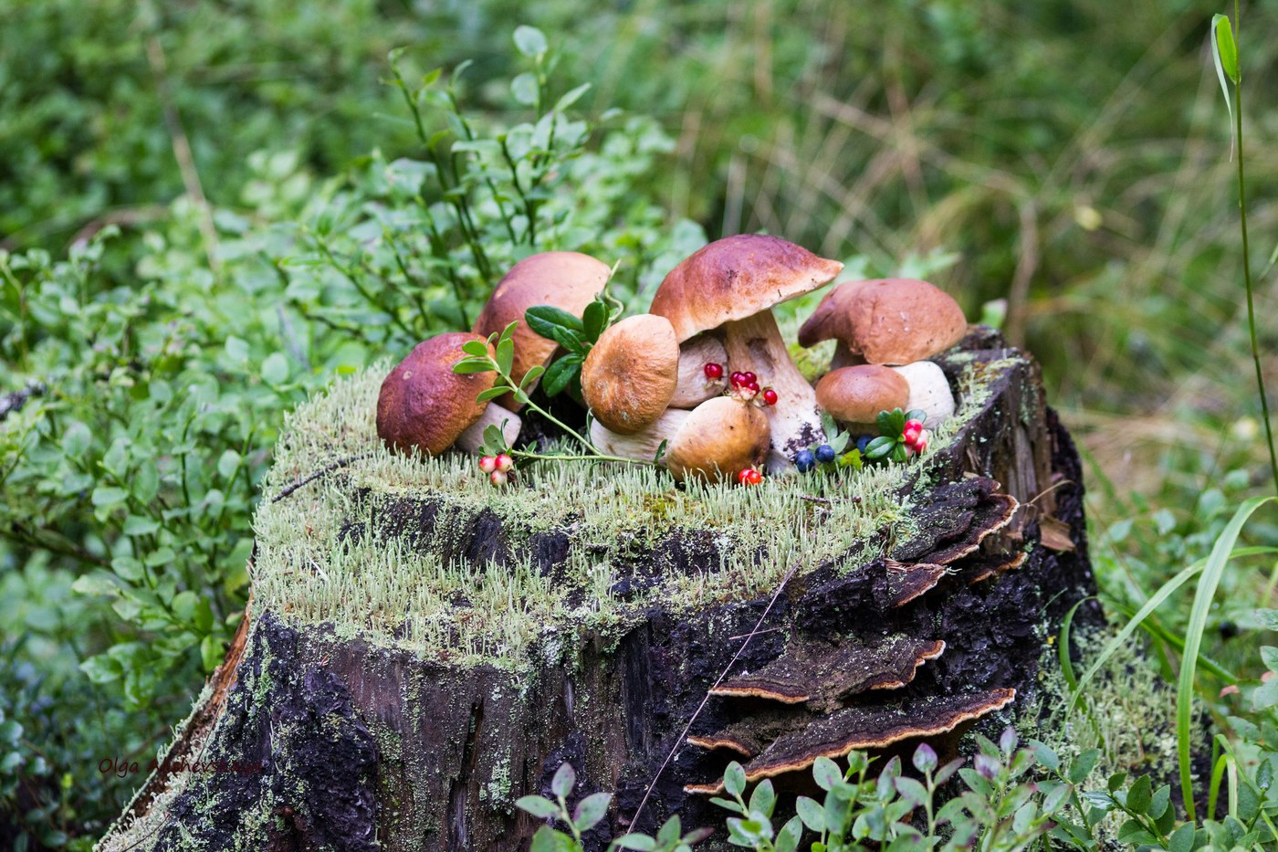 условно- и съедобные грибы, какие сейчас растут фото 1