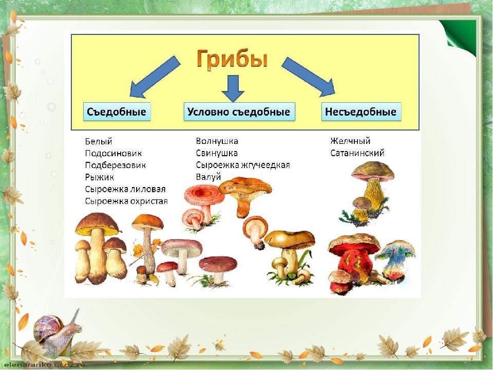 какие грибы прорастают в Самарской области фото 1