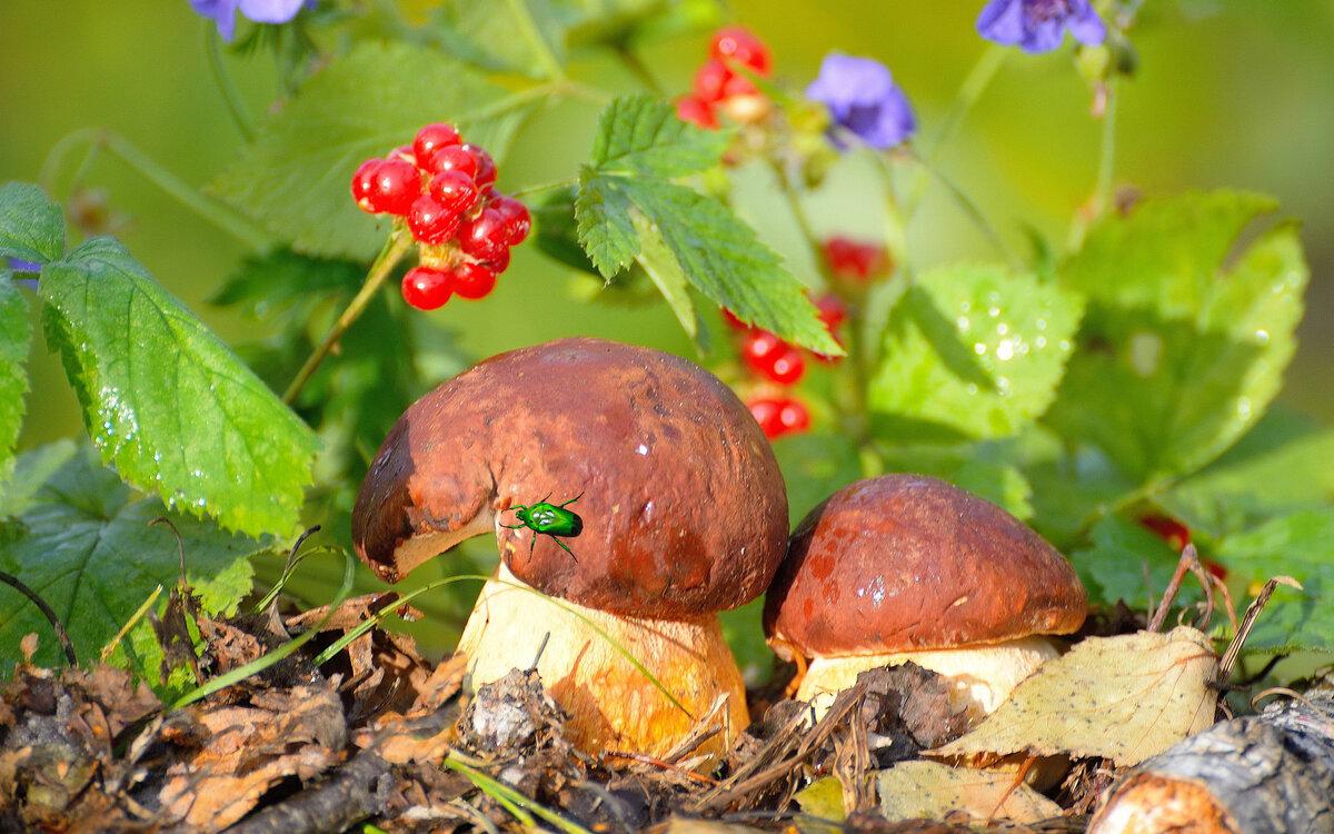 грибной сезон в Подмосковье фото