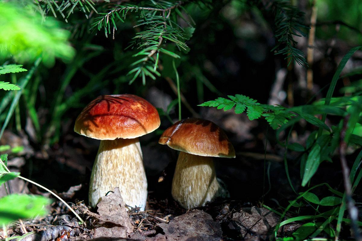 Костромская область, есть ли грибы фото