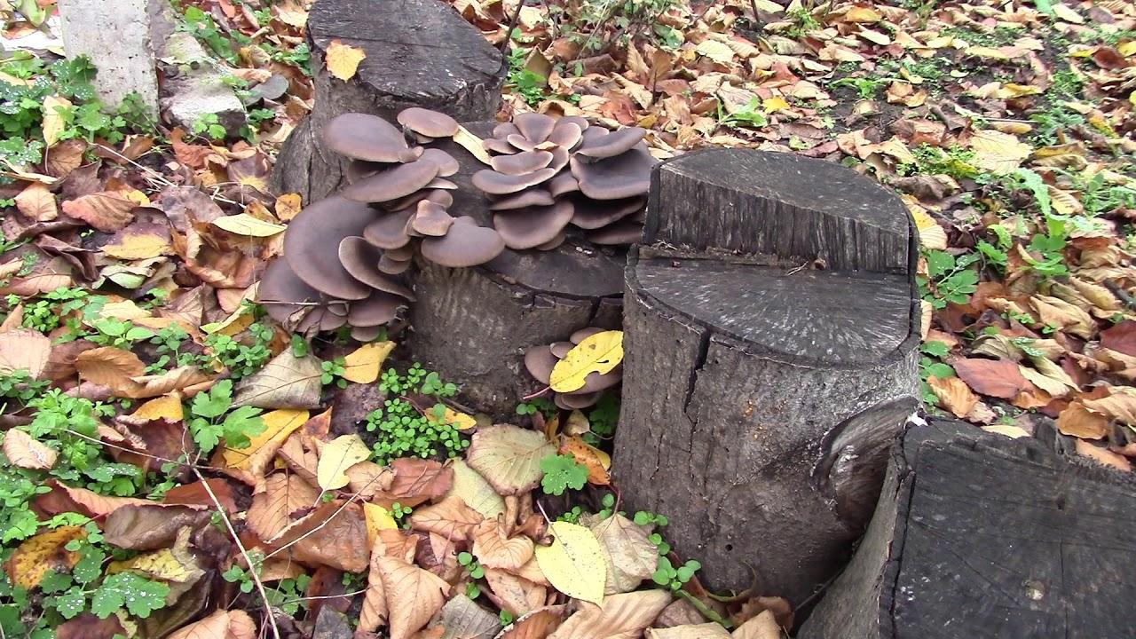 грибы и грибные места 2021 Тверской области фото 2