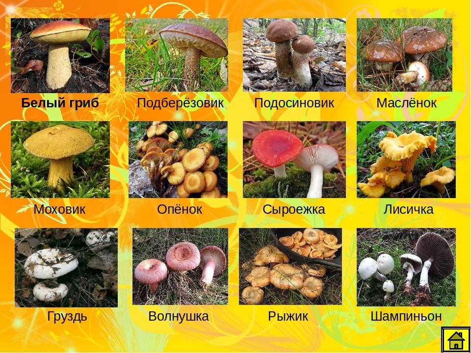 съедобные грибы 2021, ТОП 10 самых популярных фото