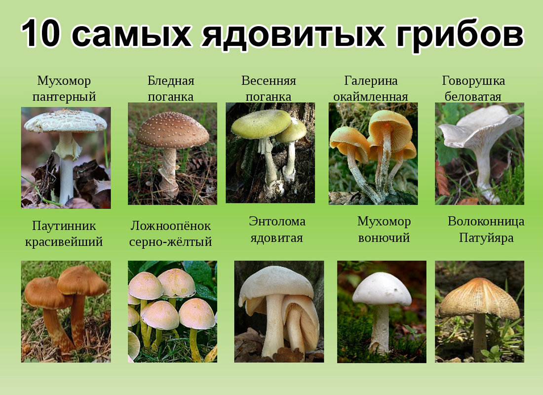 опасные и ядовитые грибы - собирать не стоит!