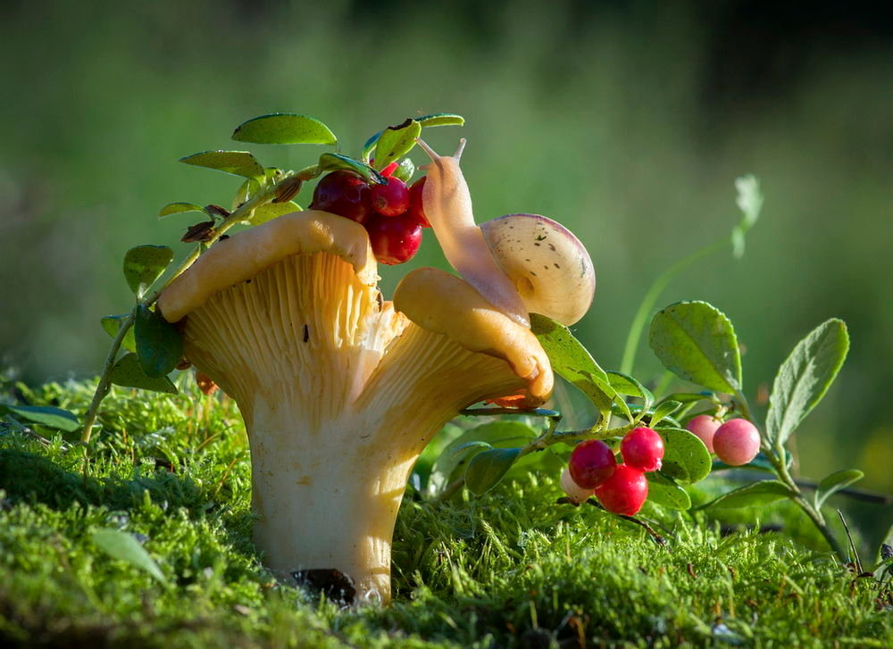 грибы в Калужской области в 2021 году фото