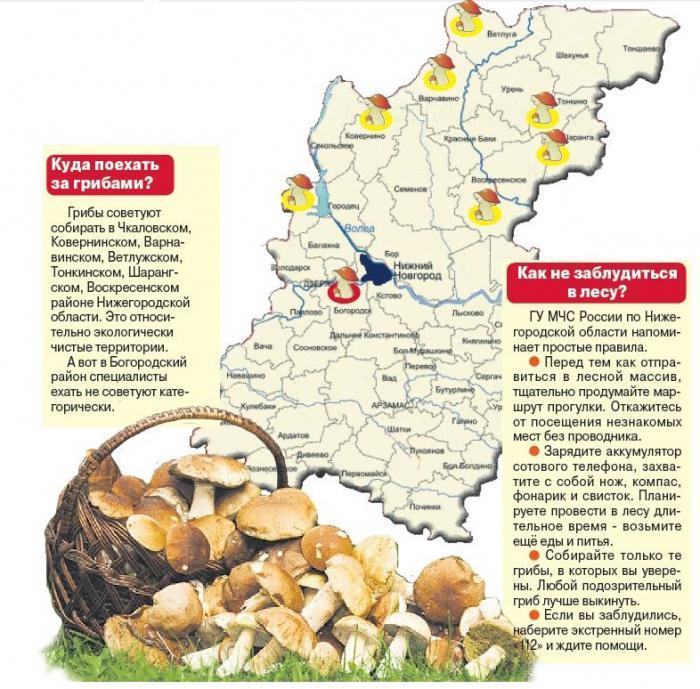 где растут грибы? Грибные места с координатами на карте фото 2