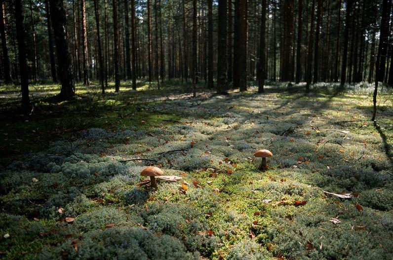 как найти грибы в Ростовской области, какие растут фото