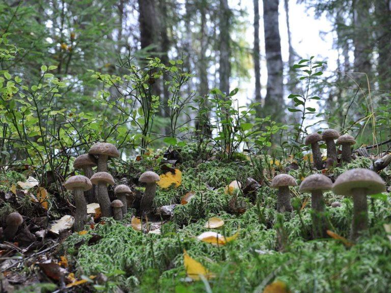 грибы и грибные места в Ростовской области 2021 фото