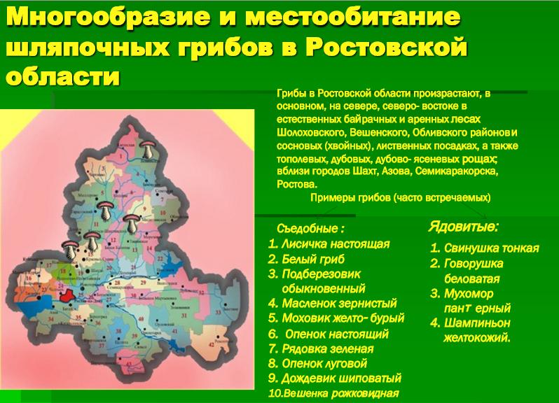 грибные места + карта Ростовской области фото