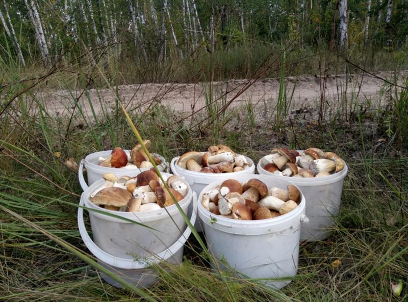 урожай грибов на фото 1