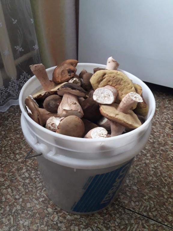 урожай грибов на фото 2