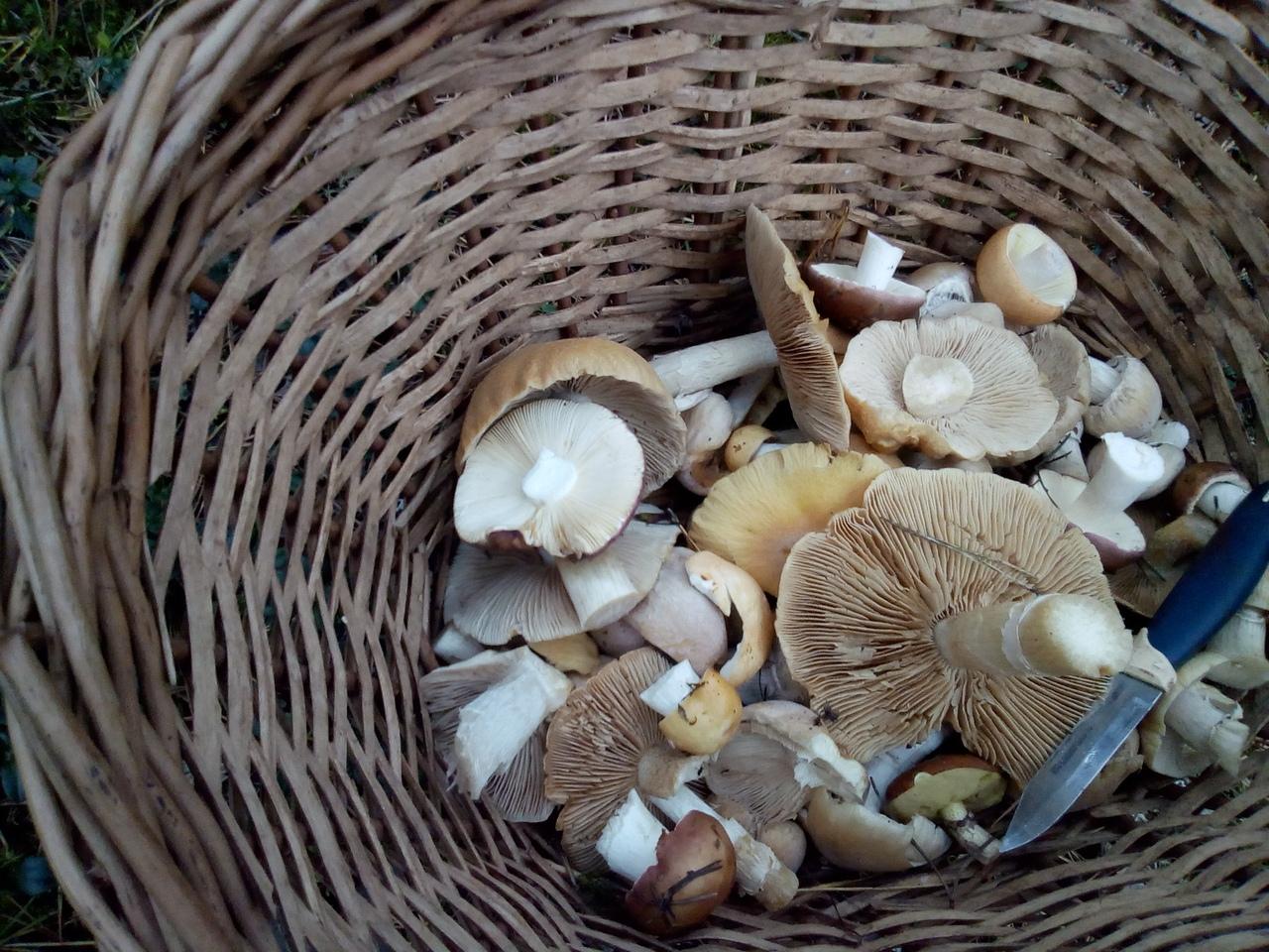 летние грибы в Сибири и на Урале фото