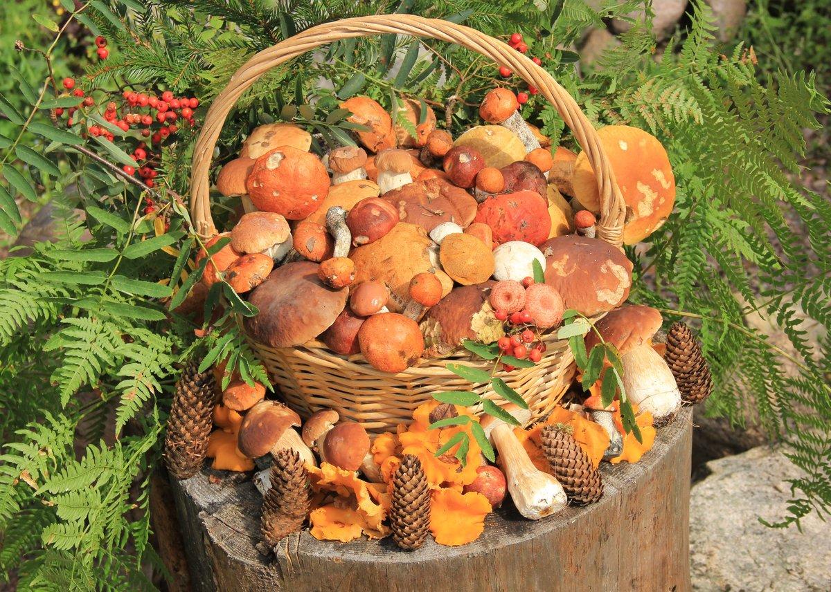 съедобные и условные грибы Урала и Сибири 2021 года на фото 2