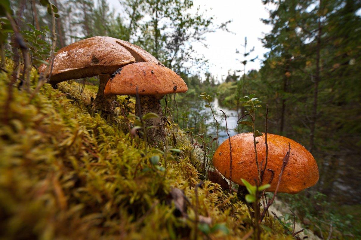 грибные места и грибы Ульяновской области 2021 фото 1