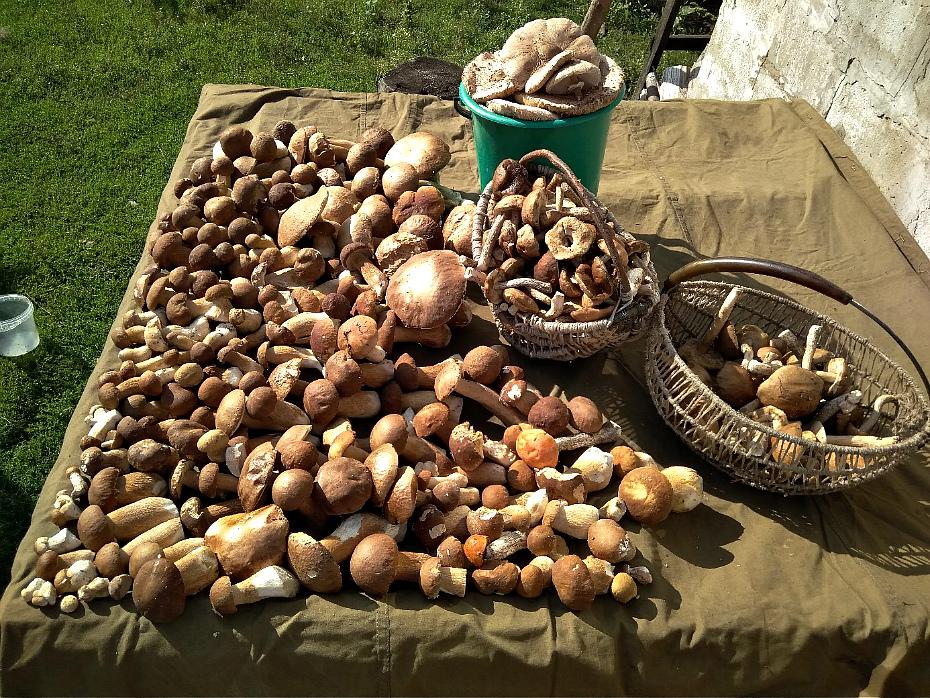урожай грибов на фото 3
