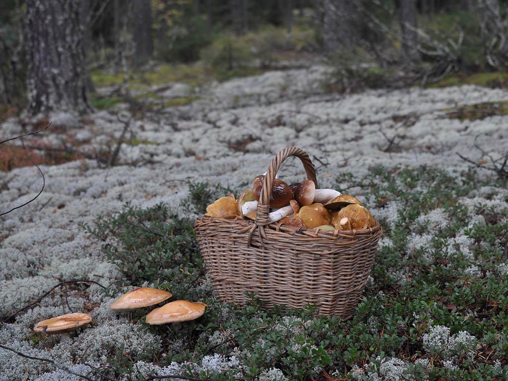 фото грибного урожая 3