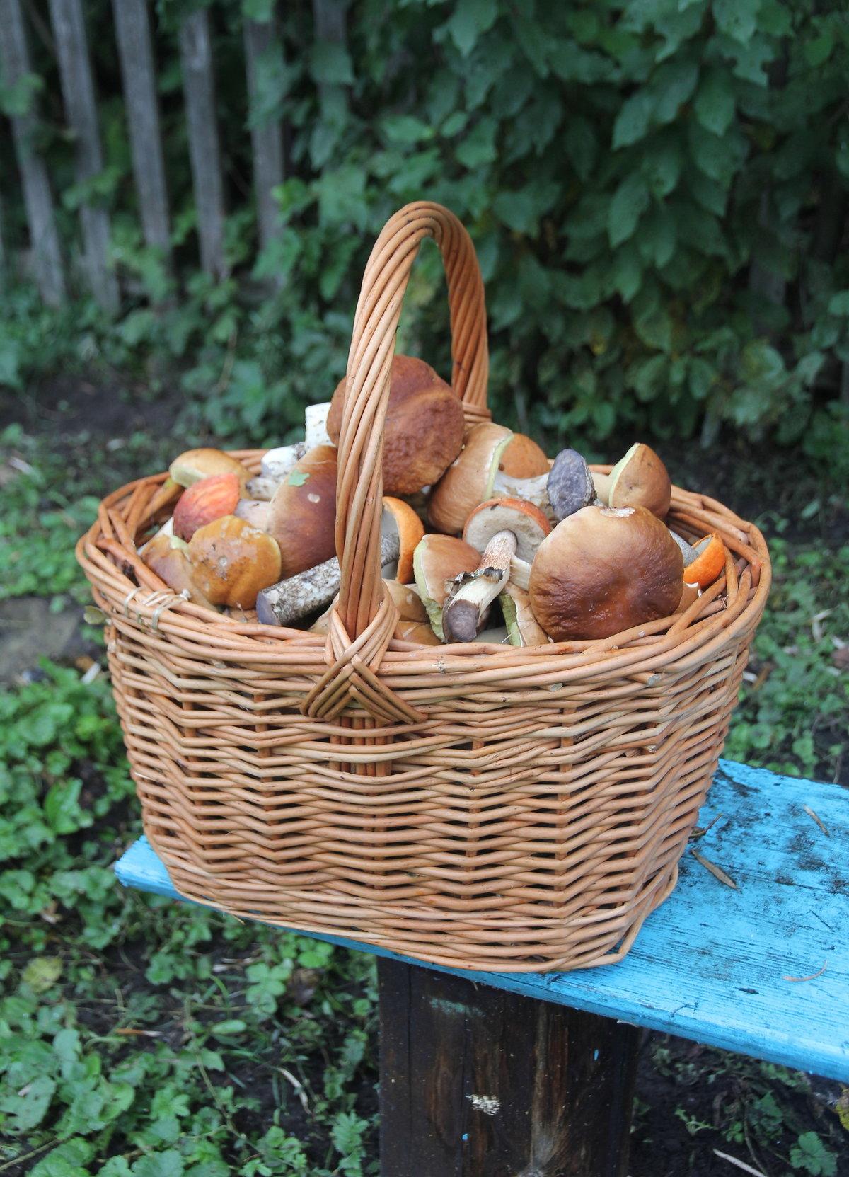 фото грибного урожая 1