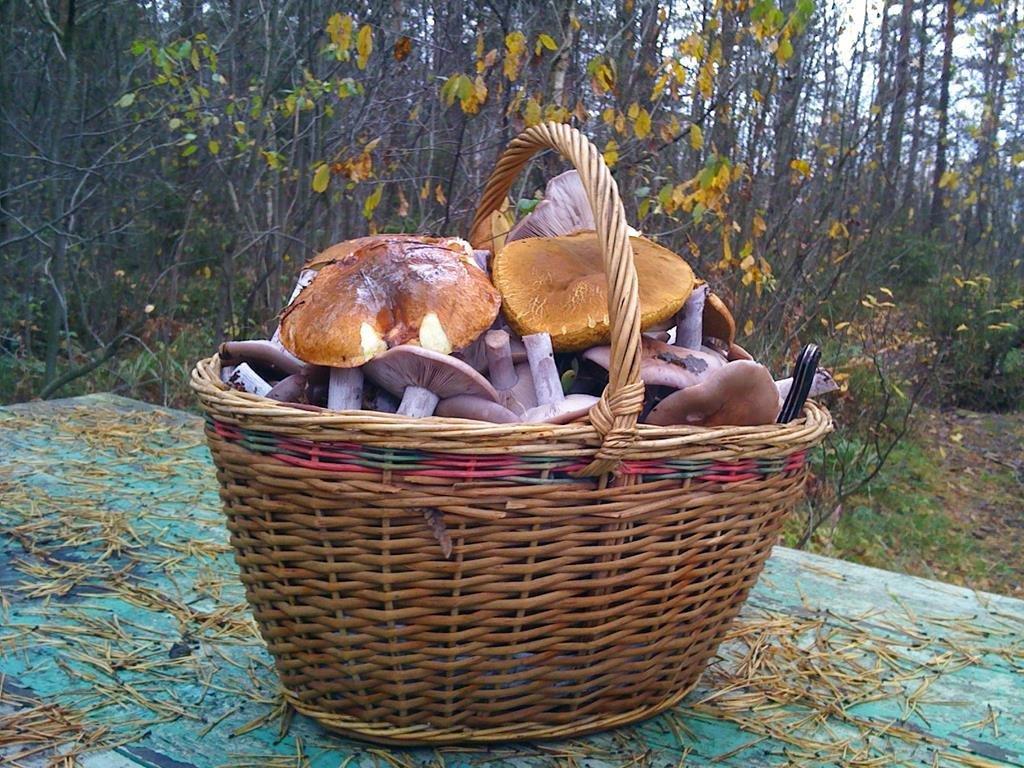 фото грибного урожая 2