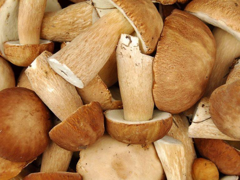 грибы и грибные места Владимирской области 2021 фото 1