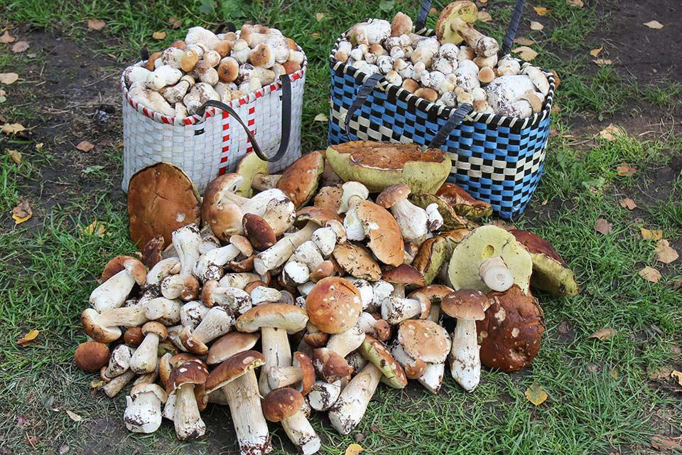 урожай грибов на фото, Владимирская область 2021 3