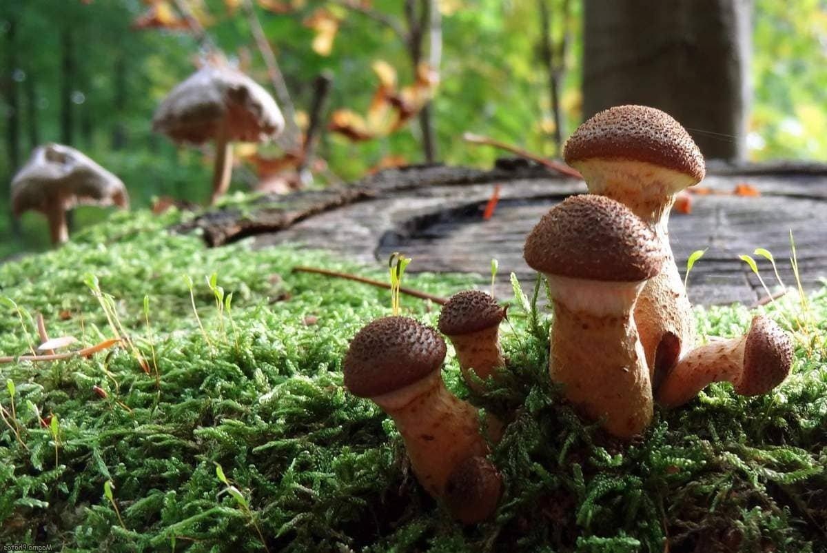 грибы в лесах Владимирской области, где растут фото 1