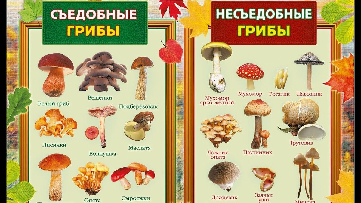 условные и съедобные грибы фото