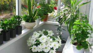 расположение комнатных цветов на лоджии