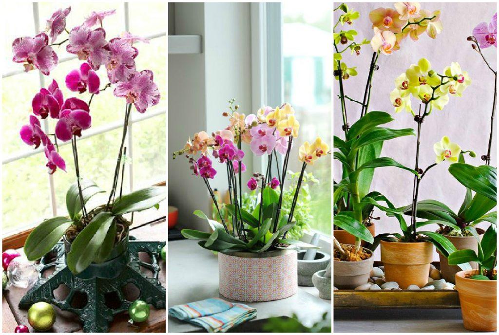 можно ли после покупки пересаживать цветущую орхидею фото 1
