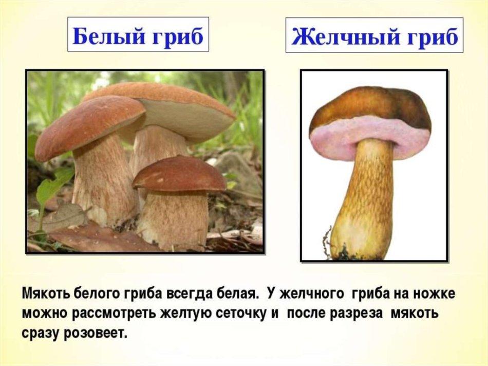 ложные грибы, стоит ли опасаться фото