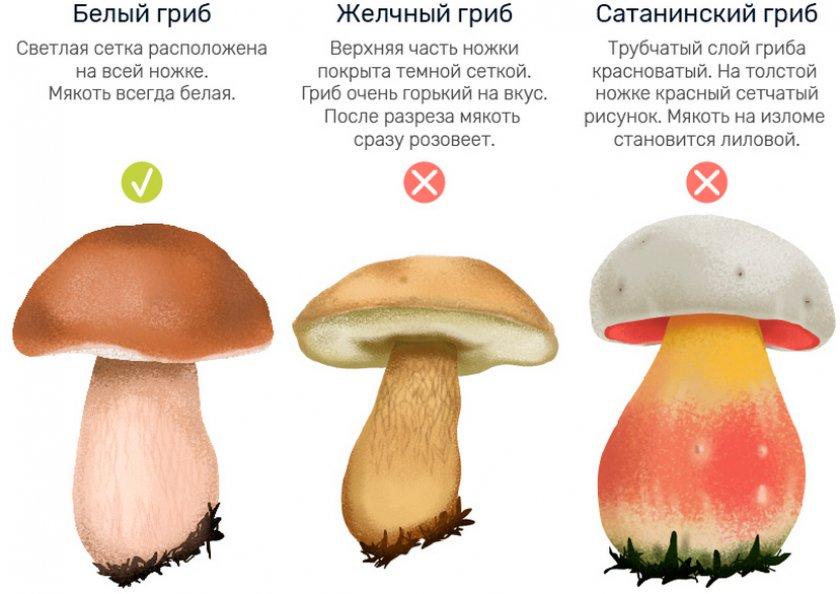 отличительные признаки съедобного белого гриба от ложного фото