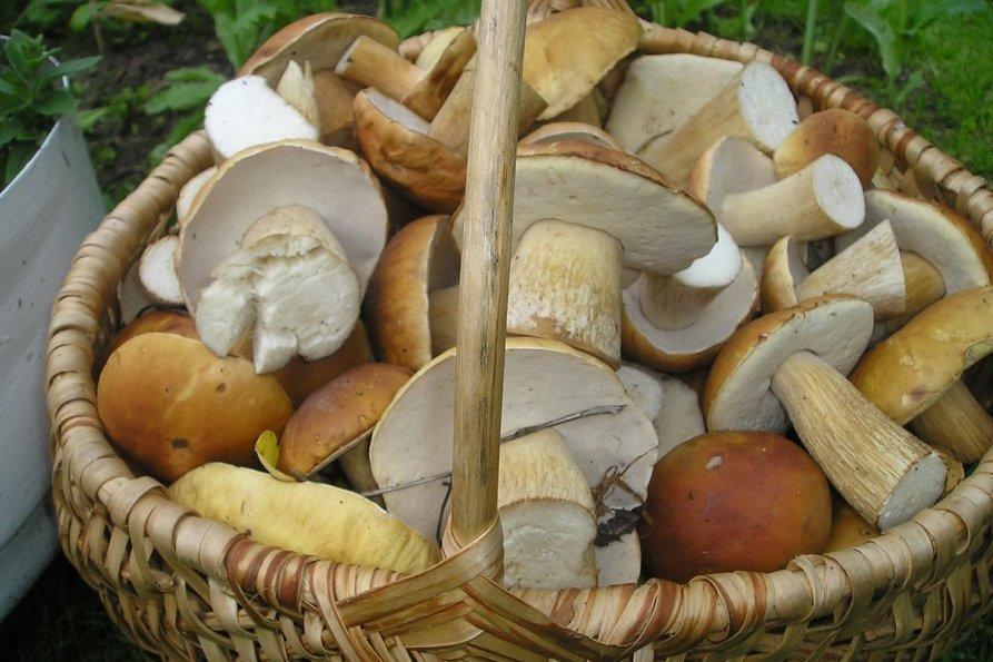 пошли ли грибы 2021 год