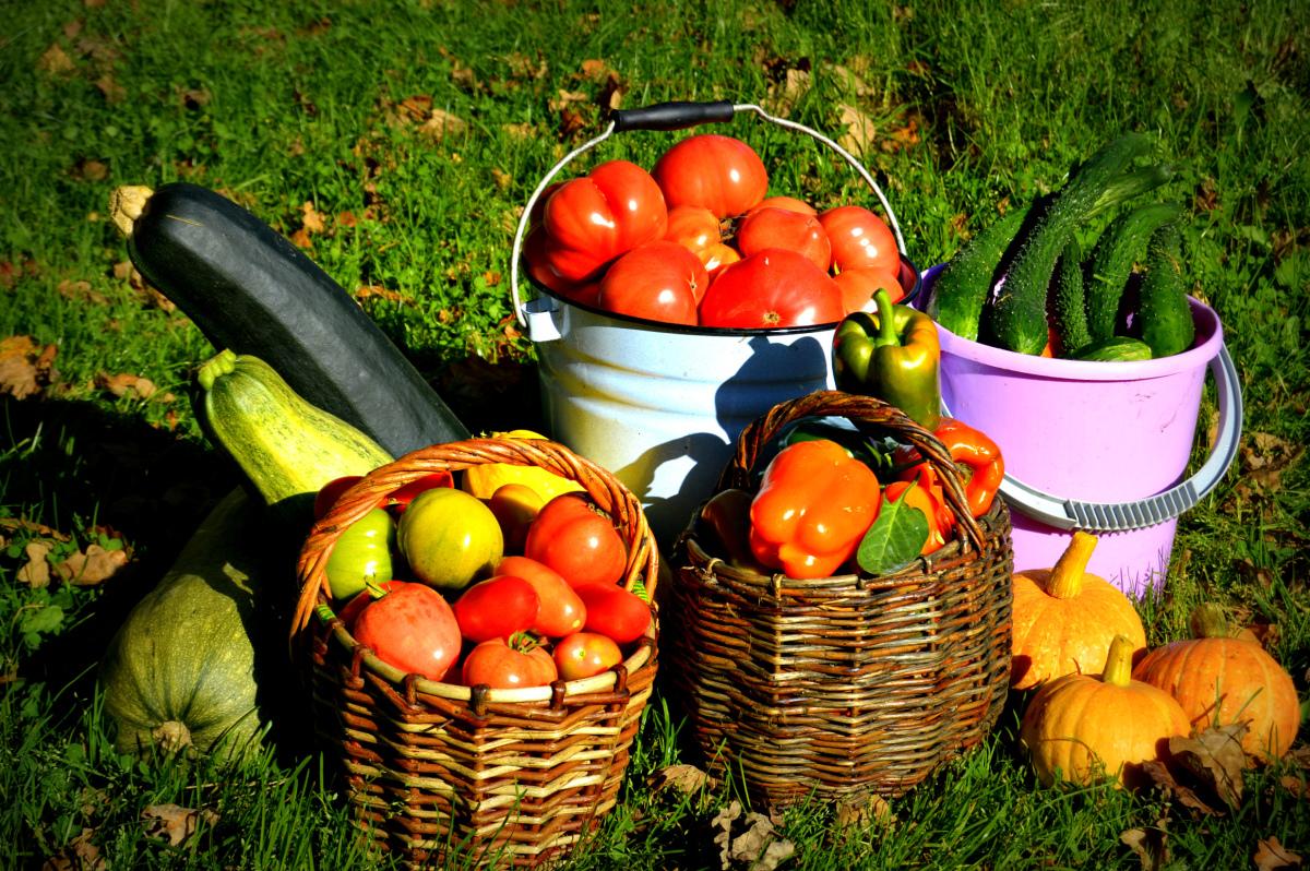 благоприятные дни для сбора урожая и хранения плодовых культур в 2021 году фото 1