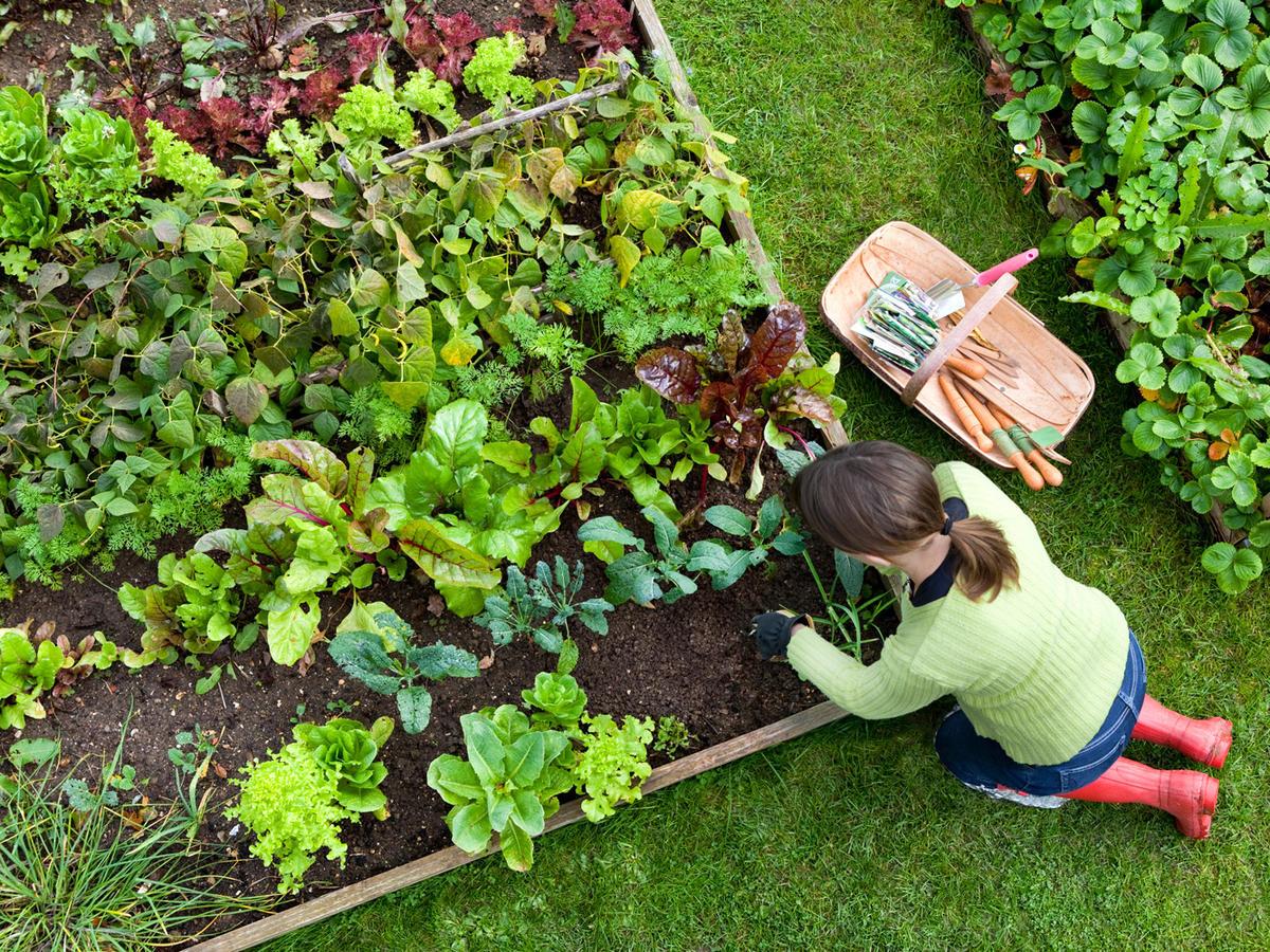 работы с комнатными растениями, дачными цветами и кустарниками фото