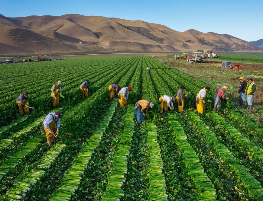 благоприятные дни для сбора урожая в 2021 году фото