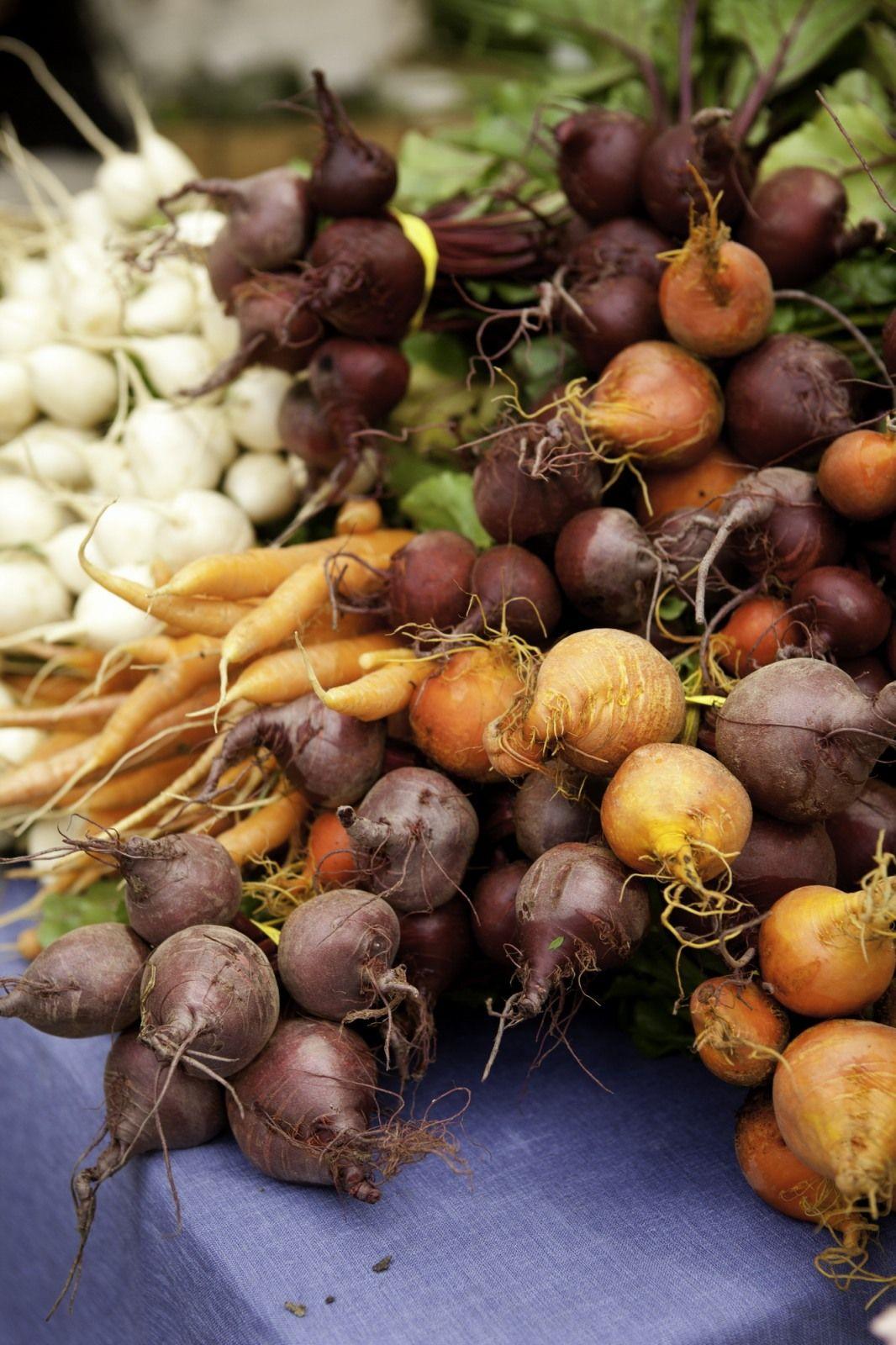 корнеплоды фото