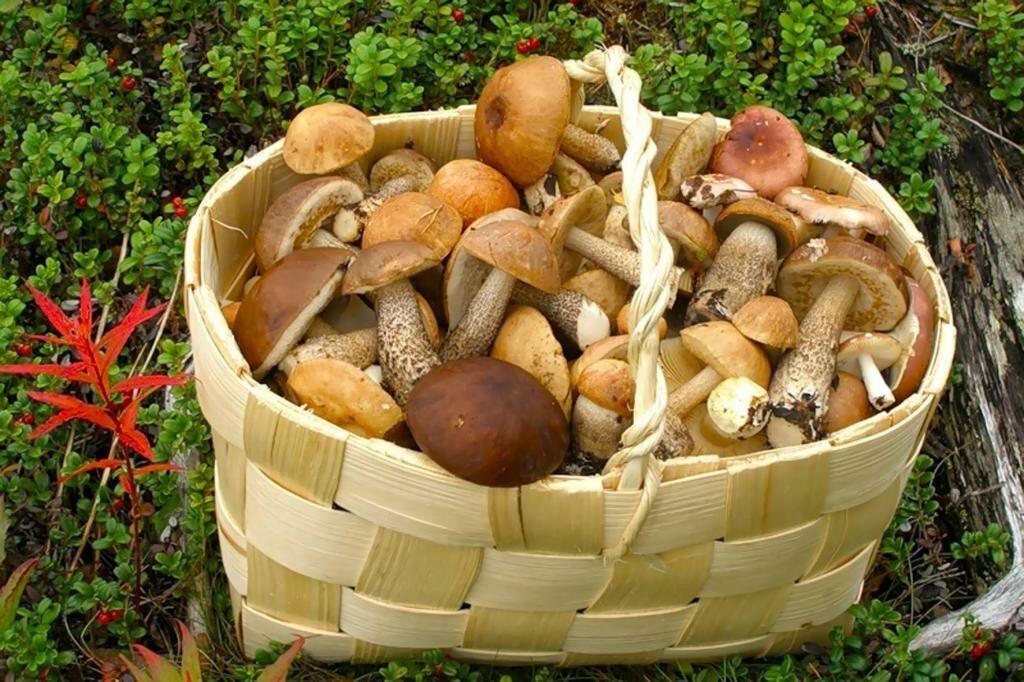 грибы Белоруси, виды + фото 1