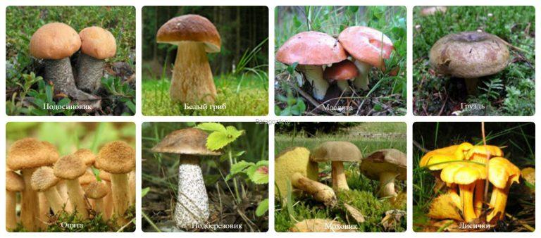 какие грибы встречаются и активно растут в Рязани фото 2