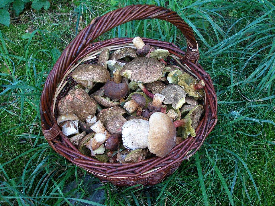 грибы в тамбовской области 2021 год форум