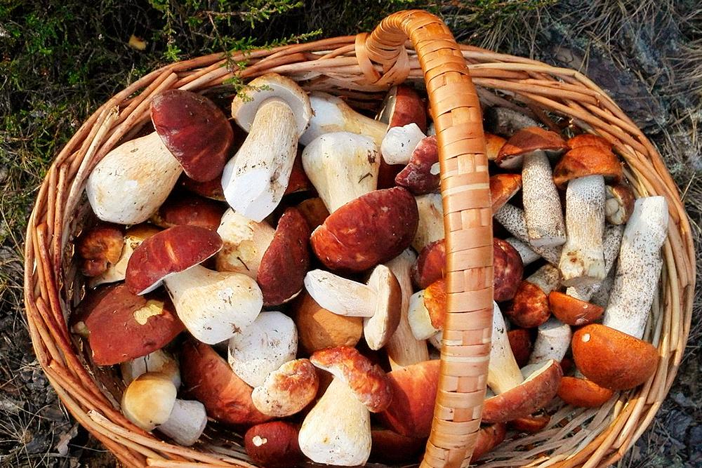 фото урожая грибов 2